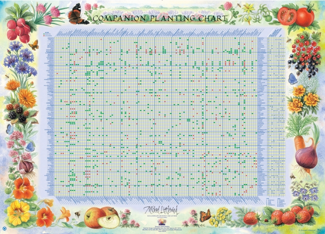 Poster - Companion Planting Chart | Syracuse Cultural Workers